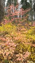 San Francisco, California, Yosemite, Yosemite National Park, Yosemite Falls,, autumn, leaves, colorful,