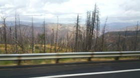California, sun, dry, burnt, landscape, yellow, yosemite national park, killed, fire,