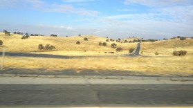 California, sun, dry, burnt, landscape, yellow,