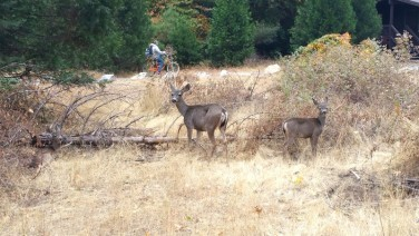 Yosemite, nature, animals, animal, deer, deers