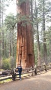 San Francisco, California, Yosemite, Yosemite National Park, sequoia, tree, big, powerful, compare. old,