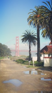 California, San Francisco, Golden Gate Bridge, Bridge, palm trees, sun, rain, paddle, paddles,