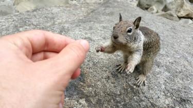 San Francisco, California, Yosemite, Yosemite National Park, Yosemite Falls, Falls, Waterfall, chipmunk, food, reaching, arms, hungry, feeding,