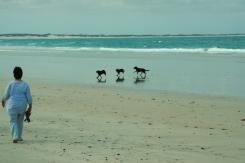 Dog's paradise? :)
