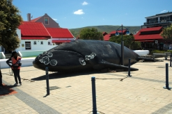 This is a 1:1 replica of an adult whale. Massive!