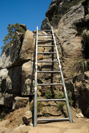 ladder on a trail to the top of lions head, cape town, south africa