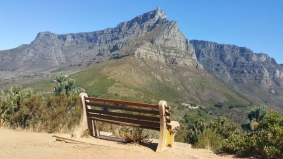 A benck with table mountain view in capetown, south africa,