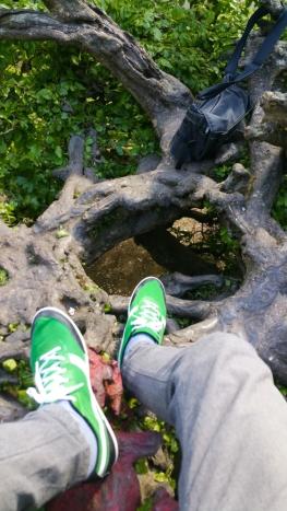 Sefton on a tree