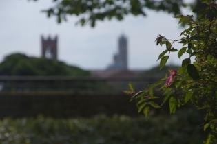 Siena Skyline