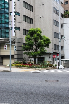 A way to grow - a lone tree in Tokyo