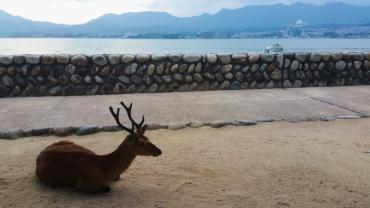 Friendly deer.