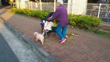A stroller for a dog