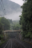 Foggy Kyoto