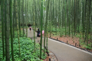 Kyoto Bamboo Forest 2