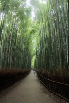 Kyoto Bamboo Forest 5