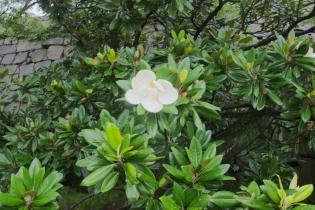 Osaka Castle plants