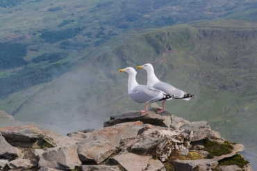 On the way up - Snowdon peak 11