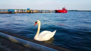 Toronto 4. Lakeside