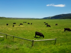 Australian open plains