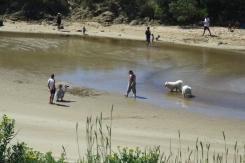 Ocean Road Dog Paradise 2