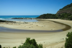 Ocean Road Dog Paradise 3