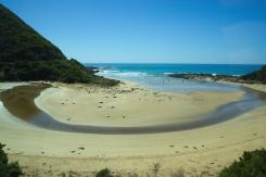 Ocean Road Dog Paradise 4