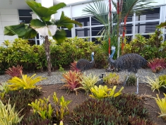Cairns Airport 3
