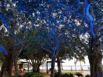 Cairns city centre 4