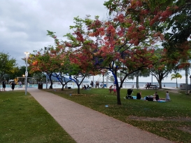 Cairns city centre 5