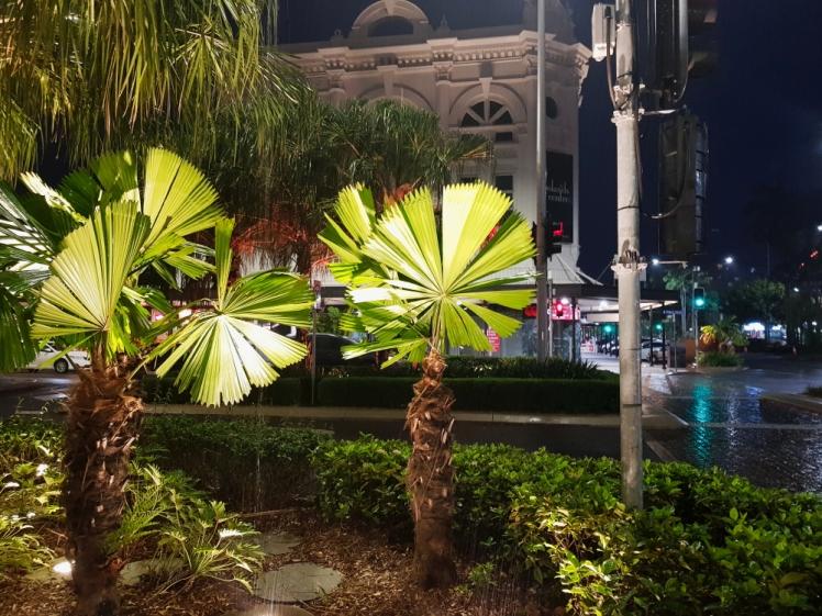 Cairns exotic plants