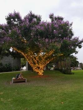 Cairns park