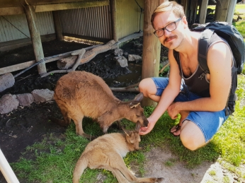 Maru Koala Park 3