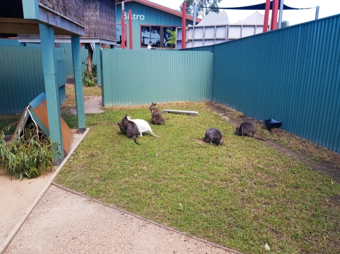 Maru Koala Park