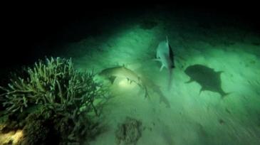 Night Dive 11-1