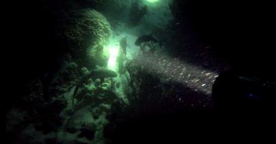 Night Dive 5