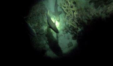 Night Dive 6