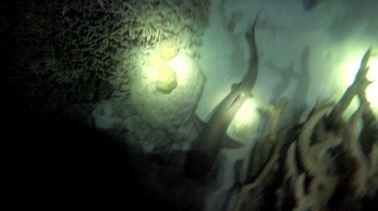 Night Dive 7
