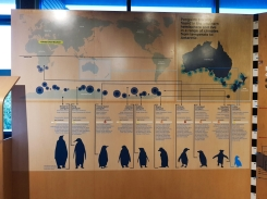 Philip Island Penguin Parade 2