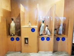 Philip Island Penguin Parade 3