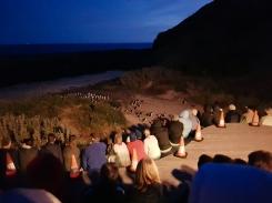 Philip Island Penguin Parade 7