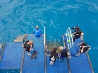 Reef Encounter platform