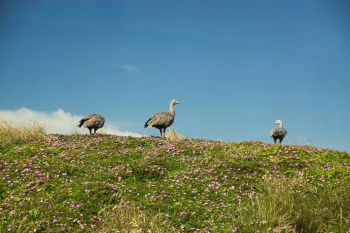 Unknown Birds